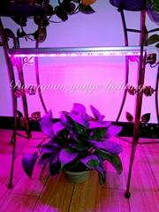 6W LED plant grow lamp,T5 tube grow light, Red blue light plant growth lamp.