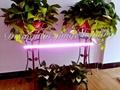 12W LED plant grow lamp,T8 tube grow light, full spectrum yellow growth lamp. 2