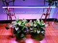 12W LED plant grow lamp,T8 tube grow light, full spectrum yellow growth lamp. 3