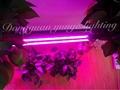 14W LED plant grow lamp,T8 tube grow light, Red blue light plant growth lamp. 3