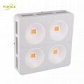 800W COB LED grow lampt,High-power