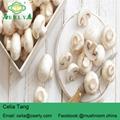 Fresh champignon mushroom