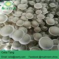 Lyophyllum Mushroom Dry mushroom 5