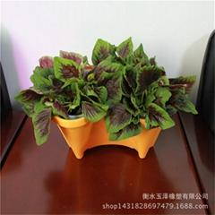 无土栽培种菜种花设备花盆