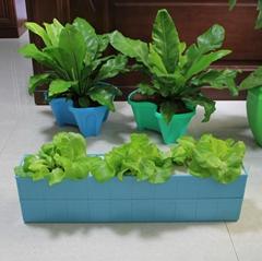 3孔6孔18孔种植花盆菜盆