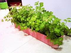 阳台种菜基质种植机花盆