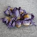 4036 Lan lian hua dried blue lotus flower 3