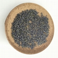 4135 Xun yi cao High Quality Lavender