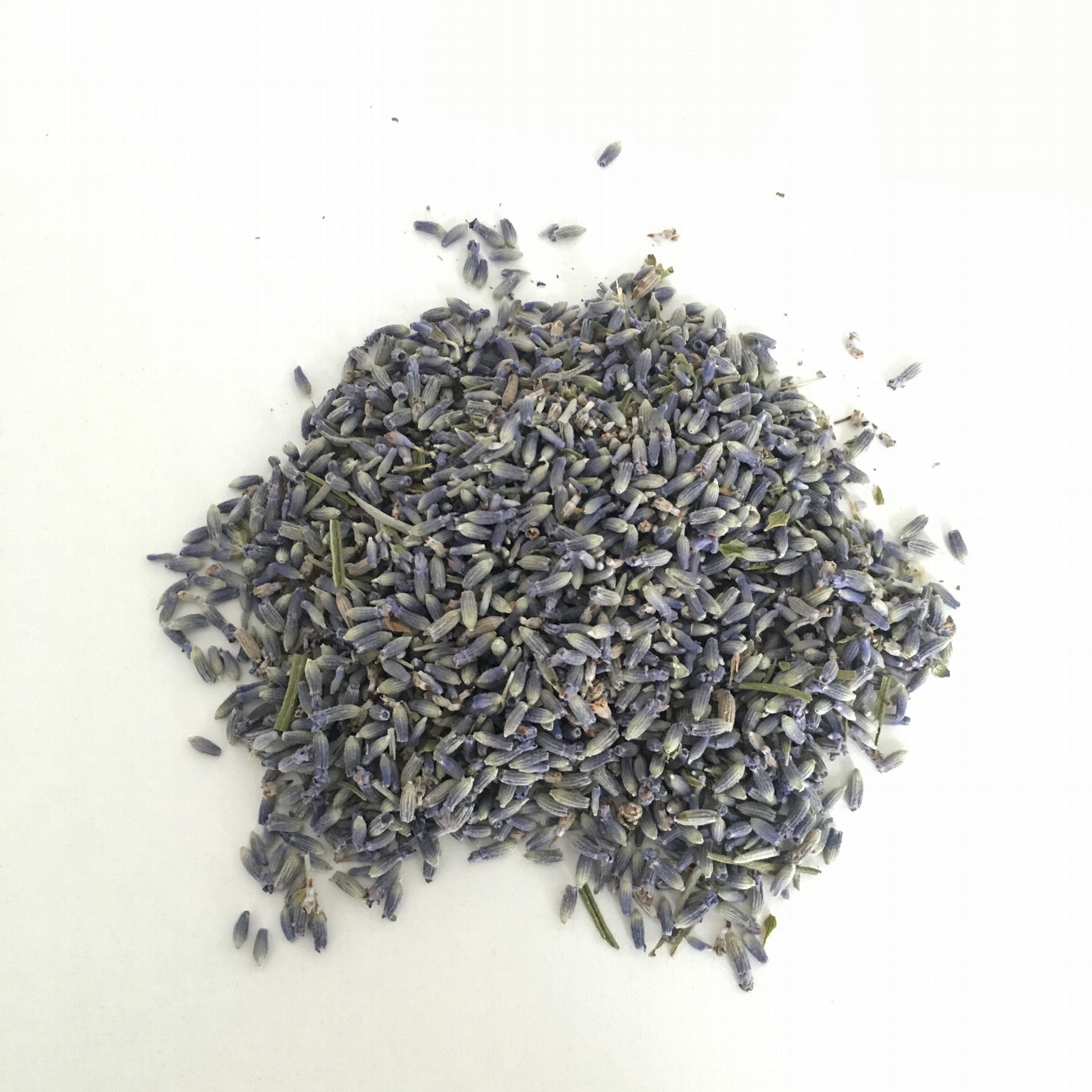 4135 Xun yi cao High Quality Lavender Flowers for Sale 4