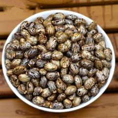 2095 Bi ma zi High Quality Castor Seeds for Making Oil