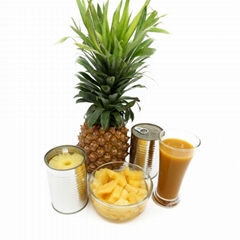 Canned Fruit Canned Pineapple Slices in Syrup