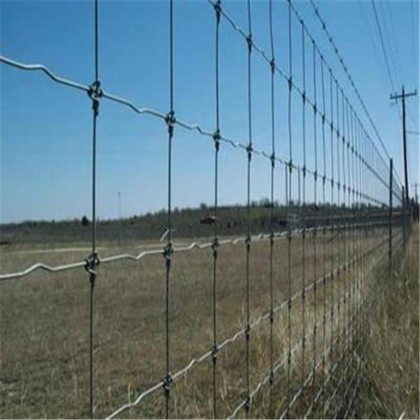 fixed knot joint hot dipped galvanized horse and sheep wire mesh ...