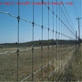 fixed knot field fencing galvanized
