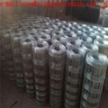 sheep wire mesh grass land fence hot selling field fence