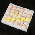 珍珠棉 3