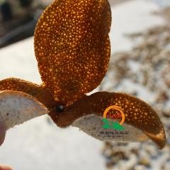 New society orange peel