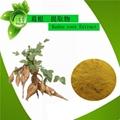 Supply high natural pueraria mirifica