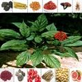 PURE  Panax Ginseng Extract Powder 80% Ginsenosides Energy & Vitality 4