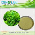 PURE Green Tea Extract Powder 90%