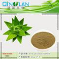 100% PURE Aloe Vera 200:1 Natural Leaf