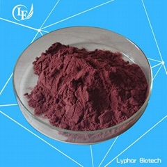 GMP Certified Factory Supply Natural Grape Seed Extract
