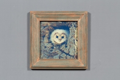 貓頭鷹北歐風格實木相框