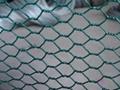 Ga  anized and pvc coated hexagonal wire netting