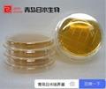 無菌成品培養基tsb藥典檢測供應 2