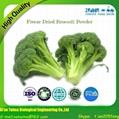 Vegetable Powder Freeze Dried Broccoli Powder 3