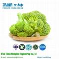 Vegetable Powder Freeze Dried Broccoli Powder 5