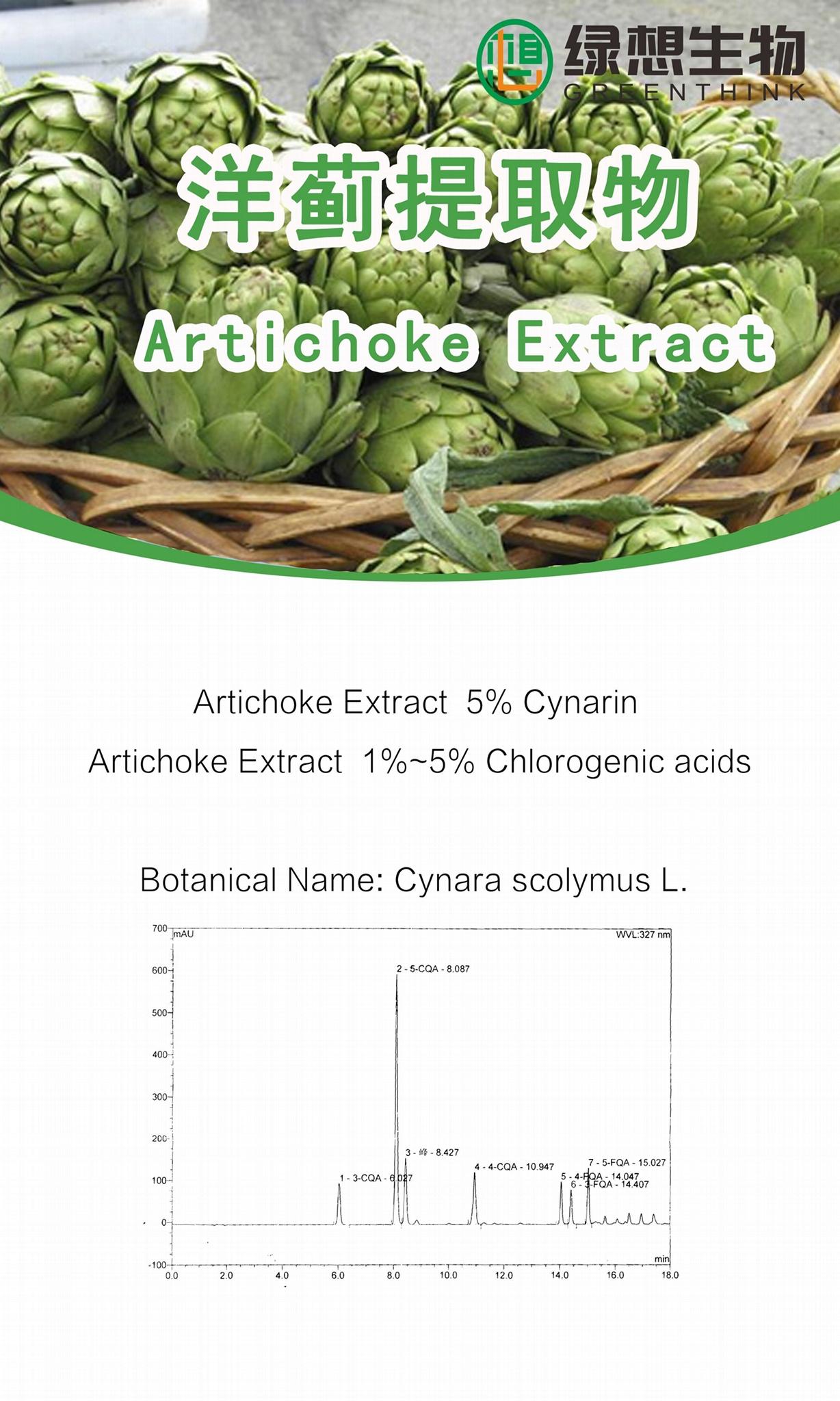 Artichoke Extract  5% 2