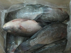 Frozen tilapia WR high quality and low price