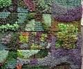 移動式植物牆