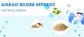 Ginkgo biloba extract 5