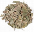 Ginkgo Leaf 2