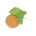 Ginkgo biloba extract 2