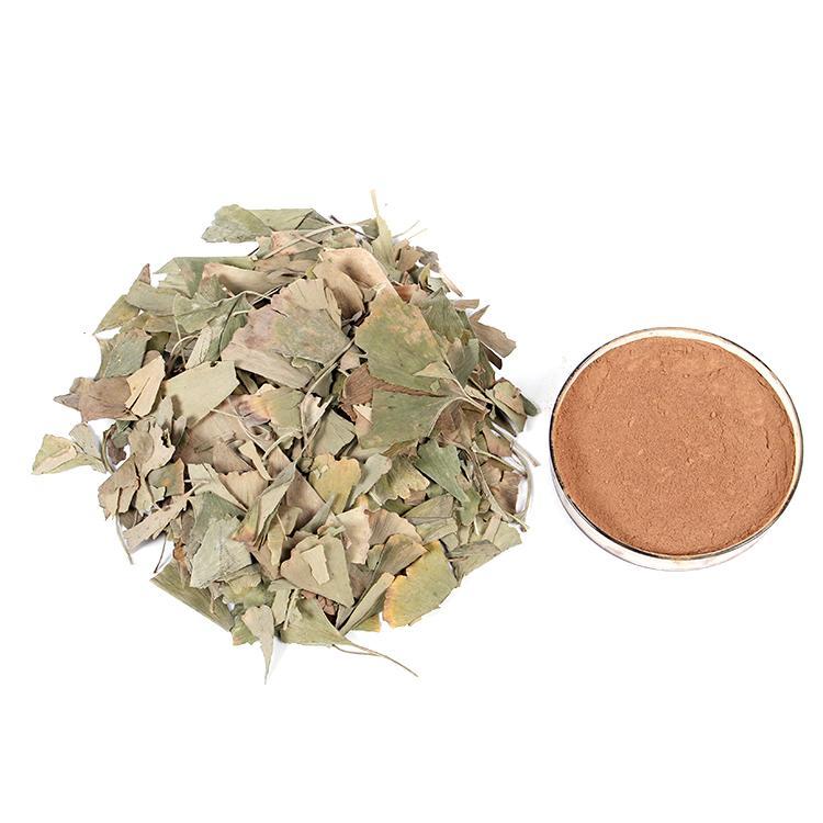 Ginkgo Leaves 3