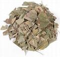 Ginkgo Leaves 2