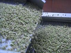 冷凍獼猴桃丁