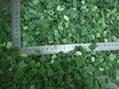 冷凍小蔥 5