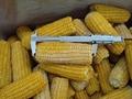 冷凍玉米粒 4