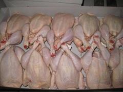 Chicken paws whole chicken chicken feet chicken leg quarters