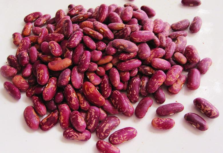 Red Kidney Bean for Sale with the Best Price  3