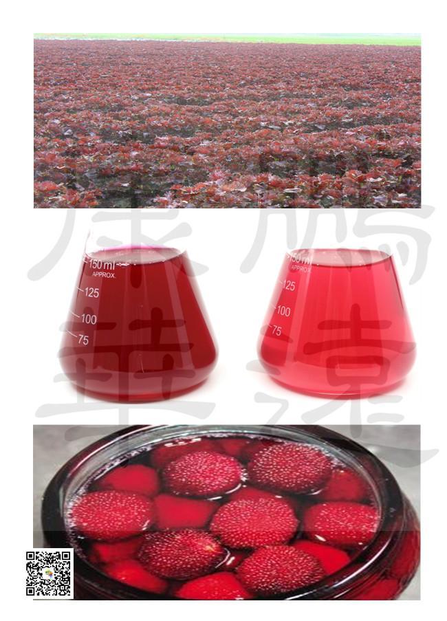 天然食品添加着色剂 紫苏红    1