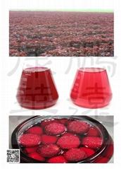 天然食品添加着色劑 紫甦紅