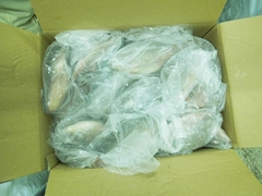 Frozen Tilapia Fillet, Whole tilapia