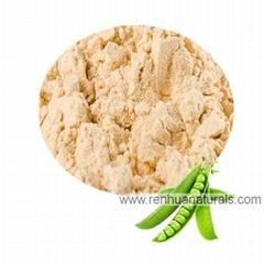 Manufacture Organic Pea Protein Powder 80% Pea Protein Non GMO