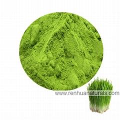 Organic Barley Grass Powder Barley