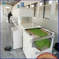 Green Tea Dryer Tea Processing Machine