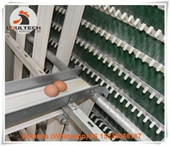Layer farming use battery poultry cages rearing 20000 birds in house